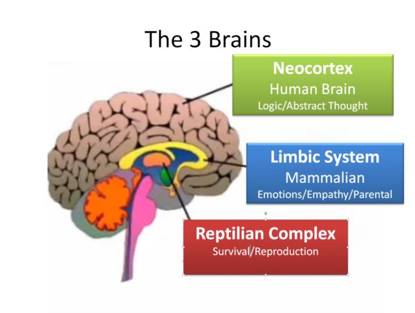 Neural Organizational Technique